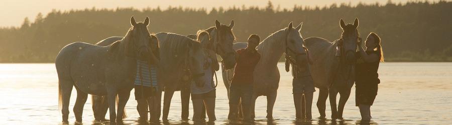 Jazda konna - Gospodarstwo Agroturystyczne Sasek - świetne tereny do jazdy